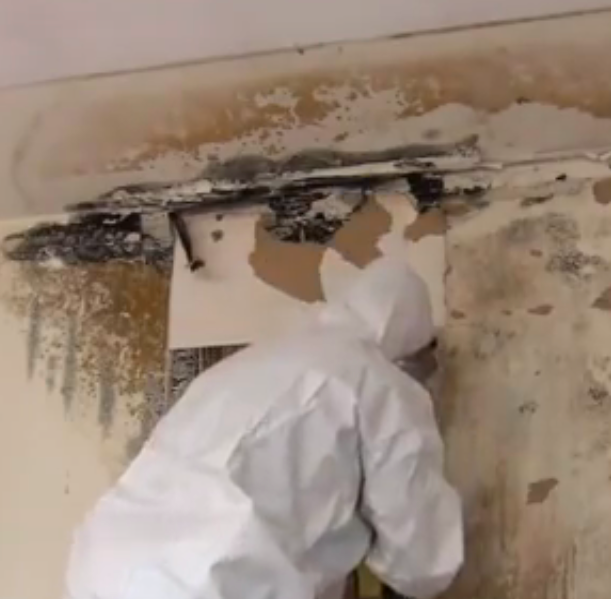 palmdale mold remediation and removal