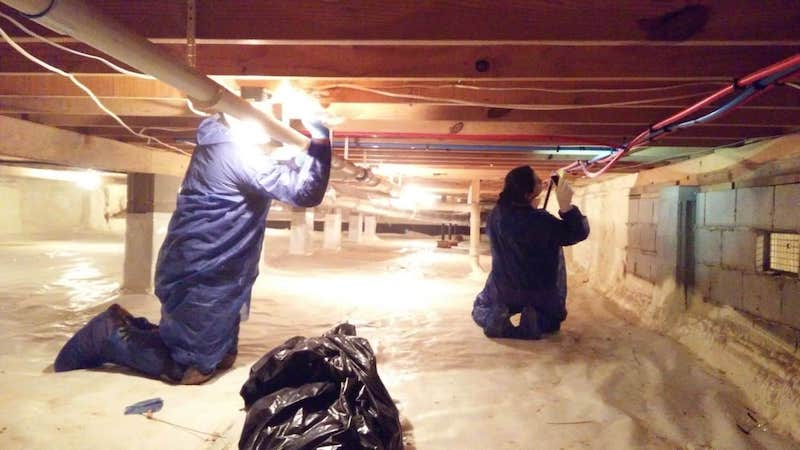 attic and roof mold remediation in palmdale