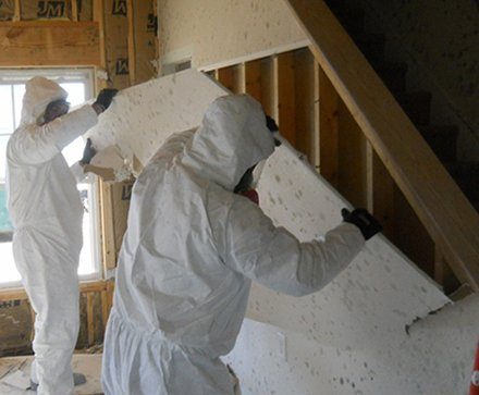 mold inspection in palmdale